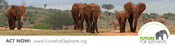 Future for Elephants e.V.